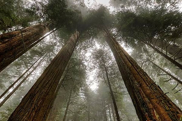 Northern California Best Camping Spots Redwood National State Parks